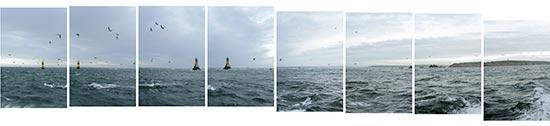 Vols de fous de bassans au passage du phare de la Vieille dans le raz de Sein