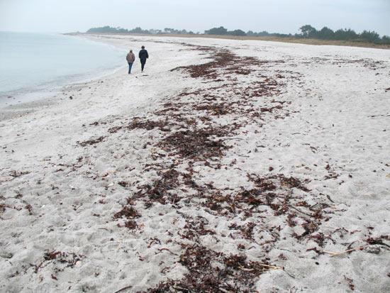 Laisses de mer à Beg-Meil