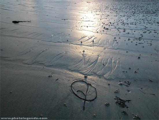 Une algue échouée dessine une arabesque sur le sable