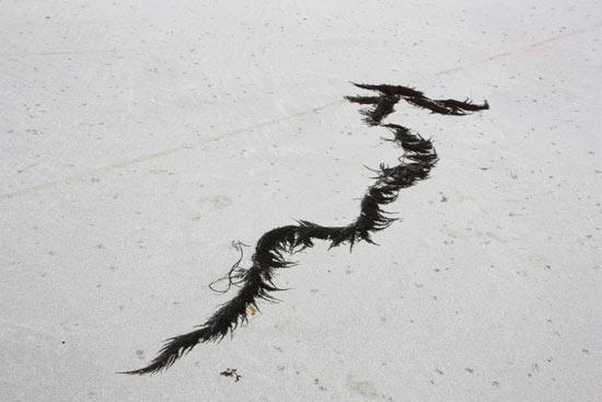 Le dragon de Santec