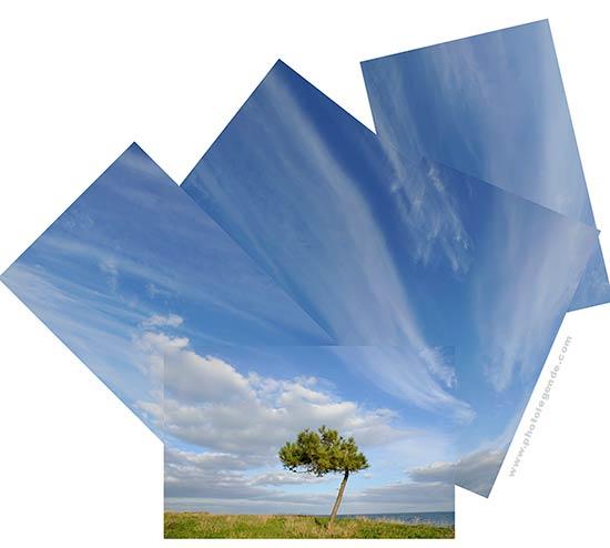 Pin maritime et ciel