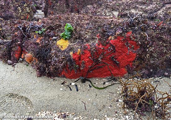 Rochers colorés à marée basse