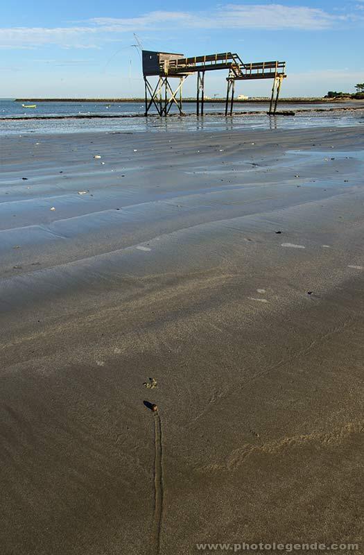 Bigorneau des sables à La Plaine-sur-Mer